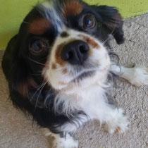 FLYKY - 5 ans : Adopté le 24 Avril 2017