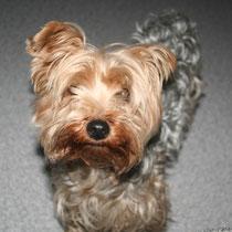 ELOISE - 3 ans : Adoptée le 12 Février 2012