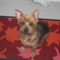 WALI - 7 ans : Adopté le 8 Décembre 2012