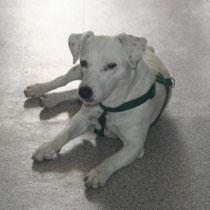 CHANEL - 6 ans : Adoptée le 26 Octobre 2013