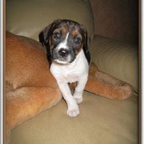 CALISTA - 2 mois : Adoptée le 27 Novembre 2008