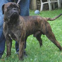 BACCUS DE THOMASSY- 2 ans : Adopté le 25 Mai 2008