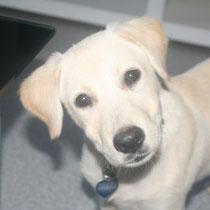 HELIOS - 5 mois : Adopté le 20 Octobre 2012