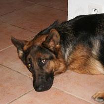 VEGANE DES PERLES DE L'ETANG - 4 ans : Adoptée le 6 Juin 2008