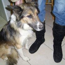 DINA - 5 ans : Adoptée le 3 Avril 2009