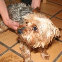 VOYOU - 4 ans : Adopté le 7 Juin 2008