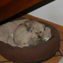 MARIUS - 2 ans : Adopté le 22 Novembre 2008