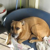 IXI - 7 ans : Adoptée le 16 Avril 2011