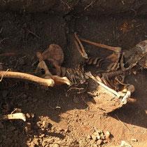 Entdeckte Gräber an der Schlosskirche