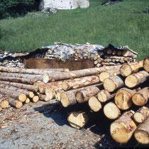 Gemeinde-Holz in der Wart