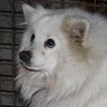 Akito - Angsthund