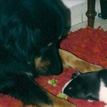 Shadow mit Sissy und Wuschel