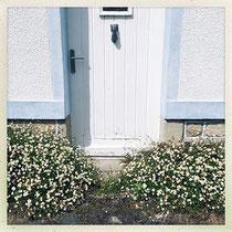 Pas de porte encadré d'Erigerons - © Sandrine Tellier