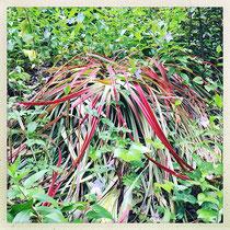 Quinta da Regaleira - Quelle est donc cette plante rouge et verte ? © Sandrine Tellier