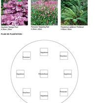 Palette végétale et plan de plantation des bacs de l'entrée du service