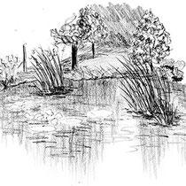 Fraicheur près d'un étang - Parc du Grand Blottereau à Nantes