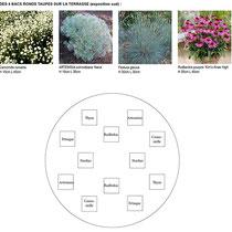 Palette végétale et plan de plantation des bacs sur la terrasse ensoleillée