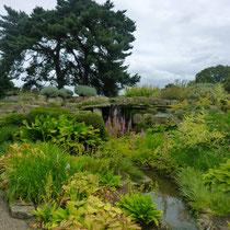 Jardin près de la serre