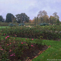 Collection de roses, Queen Mary's Garden, Londres  - © Sandrine Tellier