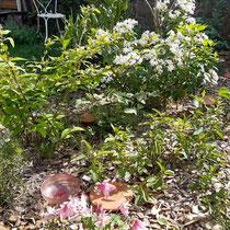 Le jardin 1 an après la plantation - Photo client