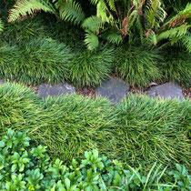 Jardin japonais - détail