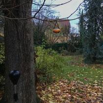 Boule de graines pour oiseaux - Suspendre aux arbres... - © Sandrine Tellier