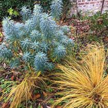 Composantes d'un beau jardin pour l'hiver : contraste de feuillages