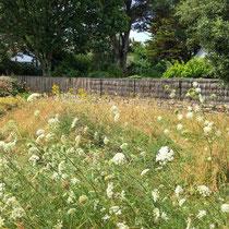 Zone de pelouse non tondue : retour de la diversité - © Sandrine Tellier
