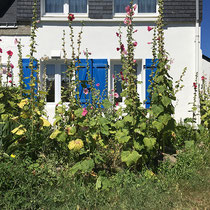 Maison bretonne et roses tremieres - © Sandrine Tellier