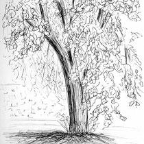 Diagnostic - Un magnifique tilleul apporte son ombre douce près de la terrasse