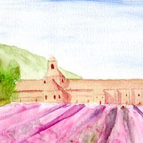 Odorat - Champ de lavande devant l'abbaye de Sénanque