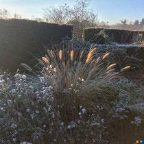 Composition sèche sous la lumière rasante de l'hiver (jardin Plume)