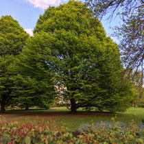 Regent's Park, Londres  - © Sandrine Tellier