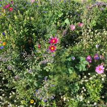 Mélange pour prairie fleurie mellifère photographié en été - © Sandrine Tellier