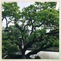 Quinta da Regaleira - Arbre majestueux © Sandrine Tellier