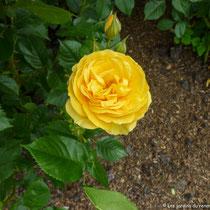 Collection de roses, Queen Mary's Garden, Londres  - © Sandrine Tellier