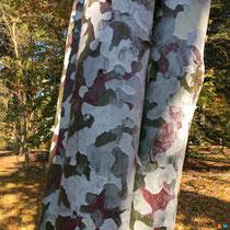 Pinus bungeana - Pin Napoléon