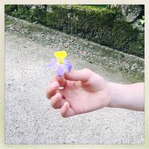 Quinta da Regaleira - Quelle drôle de fleur !!  © Sandrine Tellier