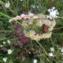 Les insectes adorent ! - © Sandrine Tellier