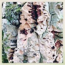 Quinta da Regaleira - Tronc du chêne liège © Sandrine Tellier