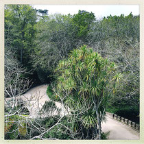Quinta da Regaleira - Contraste entre végétation caduque et persistante © Sandrine Tellier