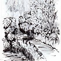 Passage ombragé dans une végétation luxuriante - Jardin botanique de Lisbonne