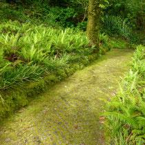 Persistante : la fougère. Plante couvre-sol d'ombre par excellence !