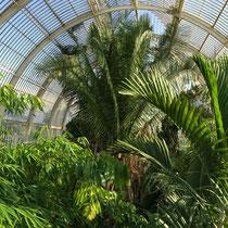 L'intérieur de Palm House