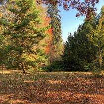 Arboretum des Barres - Couleurs d'automne