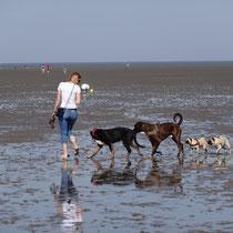 Hundestrand in Cuxhaven