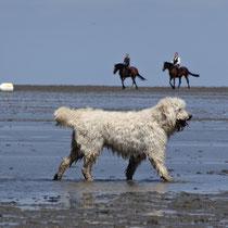 Hunde am Strand in Sahlenburg