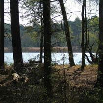 Das Finkenmoor in Sahlenburg