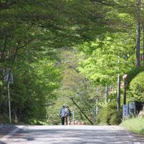 桜のトンネルは、すっかり緑のトンネルに。