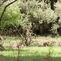 小鳥の森樹木園では、サルの家族がくつろいでいました。